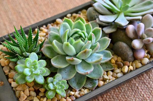 What Shade Succulents Need Dummer Garden Manage