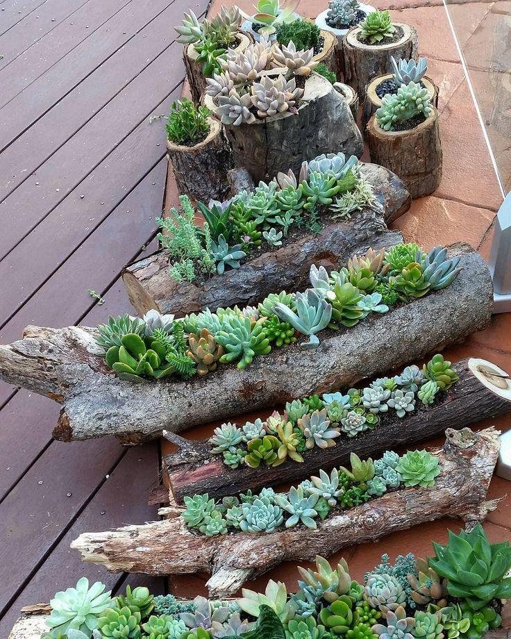 10 Secrets For Growing Healthy Succulents Outdoors Dummer