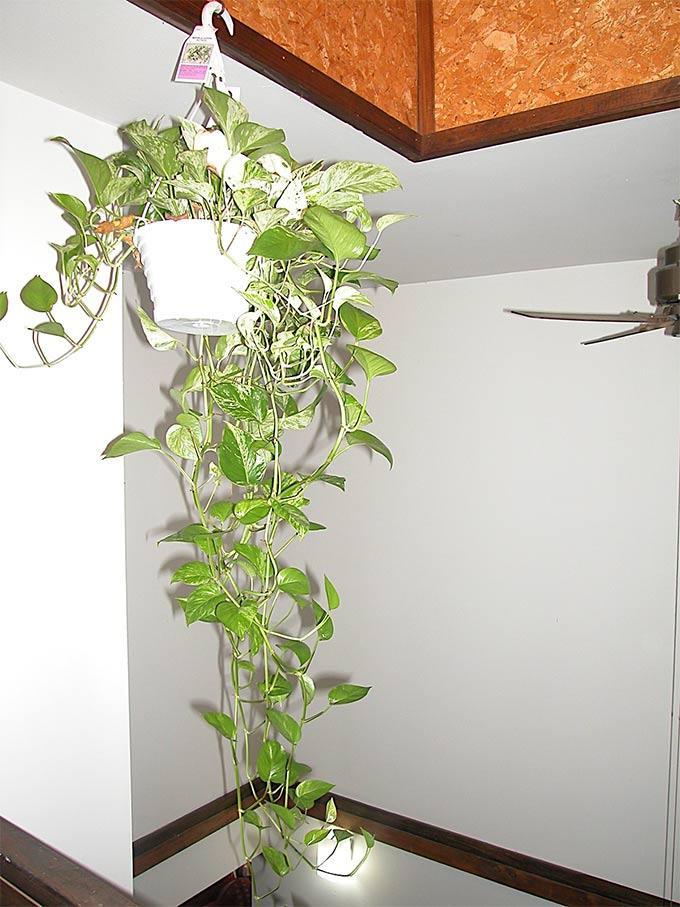 Plants For My Bedroom Tips On Growing Houseplants In Bedrooms Dummer Garden Manage Gfinger Is The Best Garden Manage App