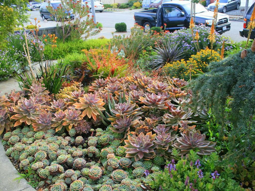 Tips For Growing Succulents Outdoors Dummer Garden Manage Gfingerは最もプロフェッショナルなガーデニングappです