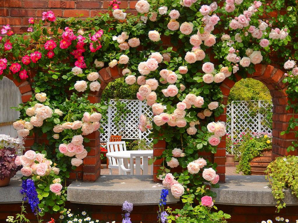 How To Grow And Care For Roses Dummer Garden Manage