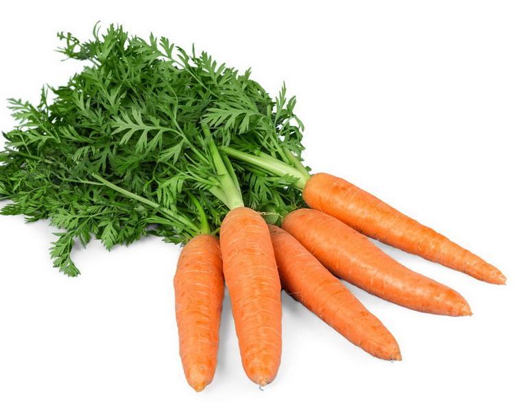 El Cultivo De La Zanahoria En Maceta Miss Chen Garden Manage Gfinger Es La App De Jardineria Mas Profesional Aprende a preparar tinga vegetariana de zanahoria con esta rica y fácil receta. el cultivo de la zanahoria en maceta