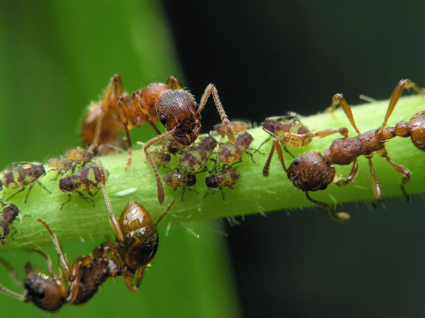 Organic Ant Control Dummer Garden Manage Gfinger Is The Best Garden Manage App