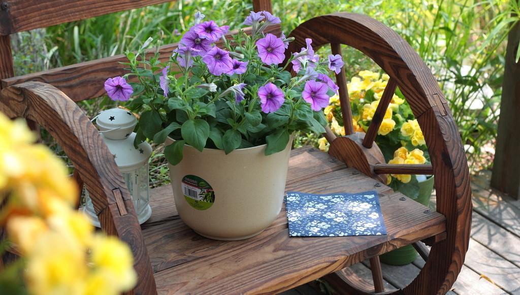 Garden Projects With Pots - Abigal - Garden Manage - GFinger