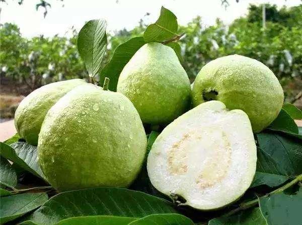 Seeds Guava Guayaba 20 Psidium Guajava Goiaba