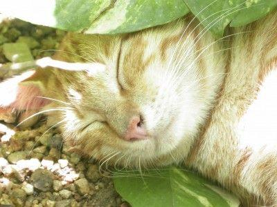 does heshe treat the plant like a buffet or a litter box read on to find out how to handle cats and christmas cactus
