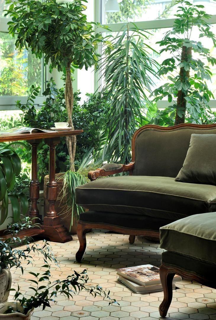 Victorian Indoor Plants Caring For Old Fashioned Parlor Plants Dummer Garden Manage Gfinger Es La App De Jardineria Mas Profesional