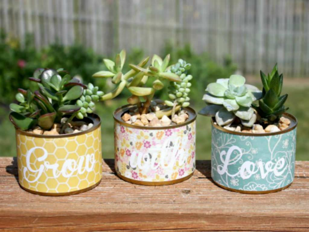 Succulent Container Ideas Unusual Containers For Succulents