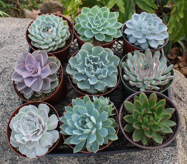Cactus And Succulent Care For Beginners Dummer Garden
