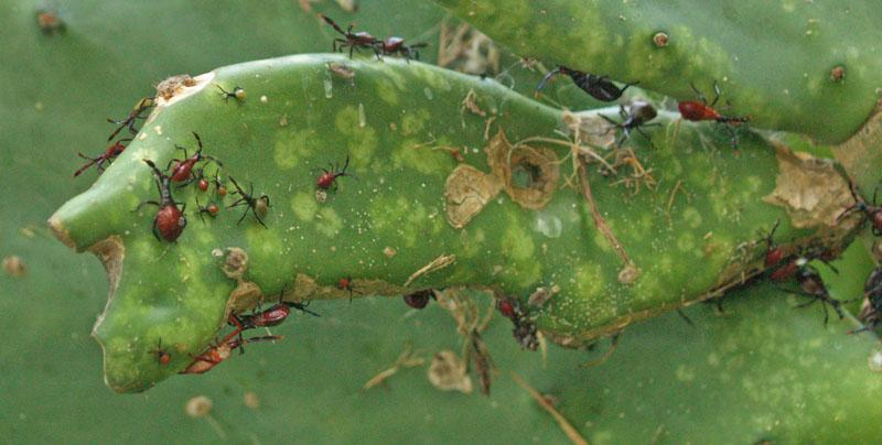 Christmas Cactus Problems.Christmas Cactus Pests Treating Common Pests Of Christmas