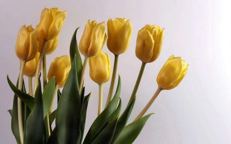 How To Take Care Of A Tulip Plant In A Pot Miss Chen Garden