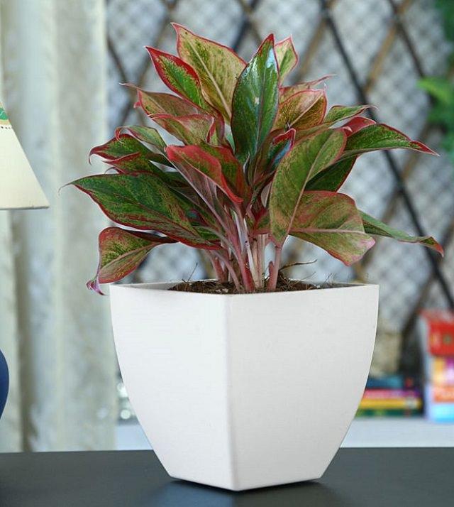29 Most Beautiful Houseplants You Never Knew About Colorful Garden Manage Gfinger Es La App De Jardineria Mas Profesional