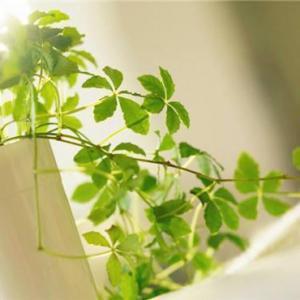 室内摆放的植物怎么修剪效果会更好?