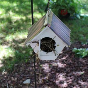 5 Ways to Encourage Wildlife into your Garden