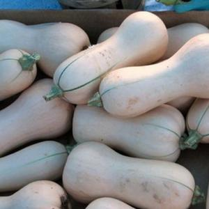 How to Ripen Butternut Squash