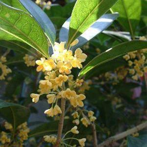 14 Cold Hardy Tropical Plants to Create a Tropical Garden in Cold Climate