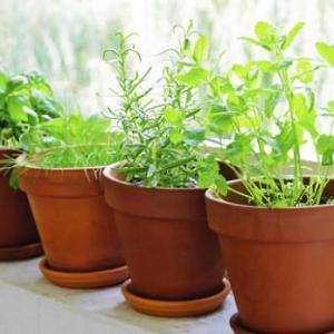 Start apartment gardening if you live in a city and don't have space for a regular garden with these 7 apartment herb garden tips.