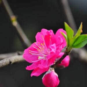 带你了解一下世界各国的国花所代表的意义
