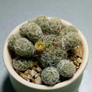 不知道这个小植物叫什么名字