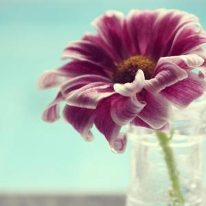 唯美的花朵特写图片欣赏(1)