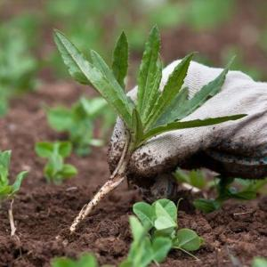 How to Keep Weeds & Grass out of Vegetable Gardens