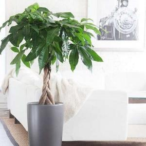 The houseplants in this list are exceptional; they are bold and pretty. Some of the most unique, beautiful indoor plants you should grow!Grow some of these plants indoors, and you'll see a big change in your interior. These beautiful houseplants have the ability to change the appearance of any dull-boring room!1. Nerve Plant