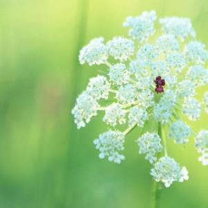 唯美的花朵特写图片欣赏(2)