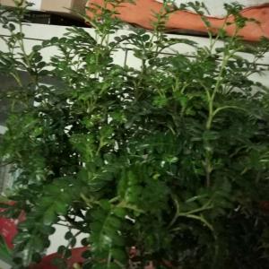 请问这是什么植物?谢谢