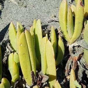 Que planta es?