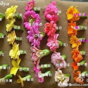 我在微博上看到了一个高手总结的 #长寿花  图鉴,拿去和自己家的一一对照吧!