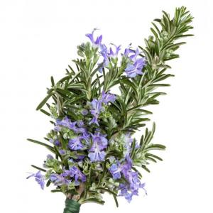 Tips🌿 Possible health benefits of rosemary Rich source of antioxidants and anti-inflammatory compounds- these are thought to help boost the immune system and improve blood circulation. Laboratory studies have shown rosemary to be rich in antioxidants, which play an important role in neutralizing harmful particles called free radicals. Improving digestion - In Europe rosemary is often used to help treat indigestion - Germany's Commission E has approved it for the treatment of dyspepsia. However, it should be noted that there is currently no meaningful scientific evidence to support this claim. Enhancing memory and concentration - blood levels of a rosemary oil component correlate with improved cognitive performance, according to research in Therapeutic Advances in Psychopharmacology, published by SAGE. Neurological protection - scientists have found that rosemary is also good for your brain. Rosemary contains an ingredient, carnosic acid, that is able to fight off free radical damage in the brain. According to a study published in Cell Journal, carnosic acid