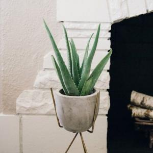 Unique looking succulents can make your rooms look better, also, they are low-maintenance and easiest plants to grow. Check out the 14 best indoor succulents for your home!