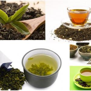 7 Best Tea Bag Uses In Garden