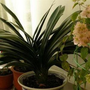 室内植物摆放小心机