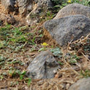 Healthy Soil for a Healthy Garden
