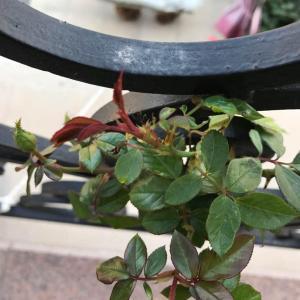 状态恢复正常了,就是入冬了,小花太袖珍了啊