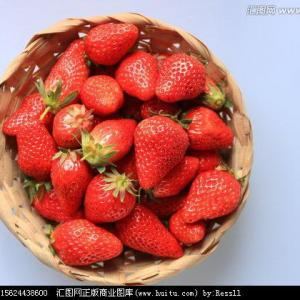 How to Plant Strawberries in Texas