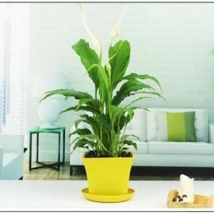 变废为宝—创意室内小植物