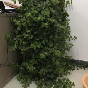 请问,这植物叫啥啊