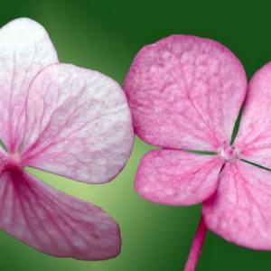 Flower—Mito enjoy