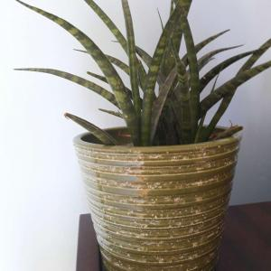 I need help to indentify this plant!!!