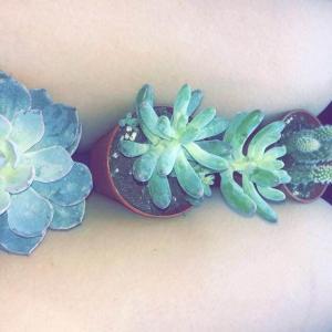 Got three succulents today!!