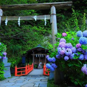 唯美的紫阳花图片欣赏