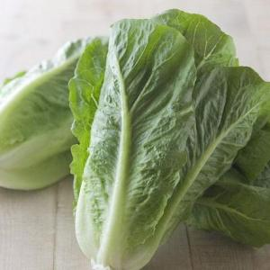 If You Trim Lettuce, Will It Regrow?