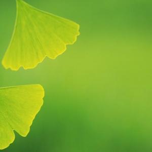 护眼的绿色小植物