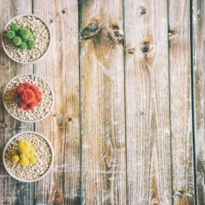 可爱的小型盆栽图片