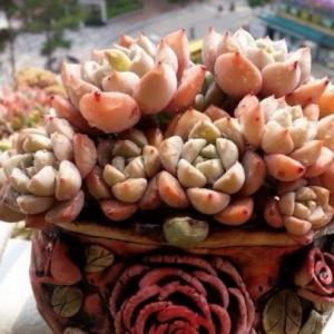 The Best Low-Maintenance Succulents to Grow Outdoors(1/2)