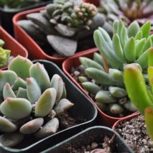 Easy Tips on How to Grow Succulents