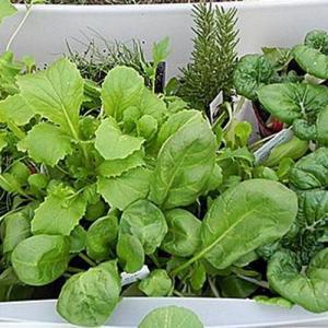 8 verduras de otoño para cultivar en jardinera