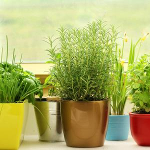 Learn how to make a windowsill herb garden, if you're short of space. Pleasure of harvesting your own herbs is immense– you can make fresh tea, use them in salads and garnish them on food.You don't need a big yard for this, just a small and simple windowsill that receives a few hours of sunlight.